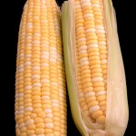 Two Ears of Corn Over Black