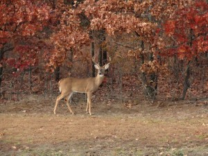 A deer visits the property of Terrapin Peak. During their stay, several guests have seen them on the property.