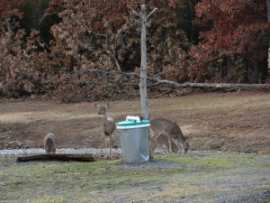 A herd of deer stop at one of the property feeders to regain energy.