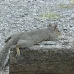 Squirrel on break